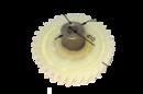 Шестерня пластиковая для электропил китайского производства и др. (D)